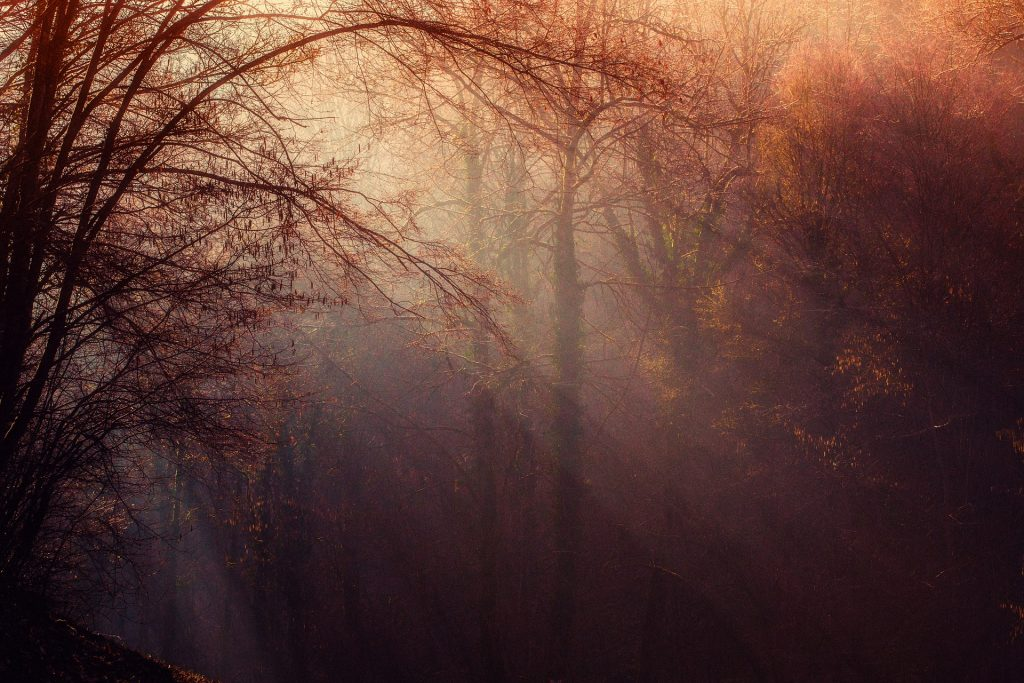 forest-1225983_1920
